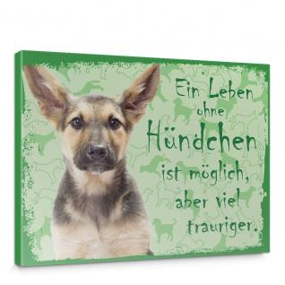 Leinwandbild Schäferhund Haustiere Hunde Tiere   no. 5487