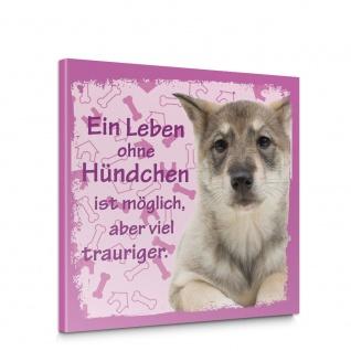 Leinwandbild Schäferhund Haustiere Hunde Tiere   no. 5491