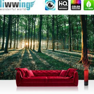 liwwing Vlies Fototapete 350x245 cm PREMIUM PLUS Wand Foto Tapete Wand Bild Vliestapete - Wald Tapete Sonnenuntergang Wald Bäume Wiese grün - no. 641