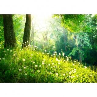 Fototapete Sunny Forest Wald Tapete Wald Bäume Natur Baum grün grün | no. 30