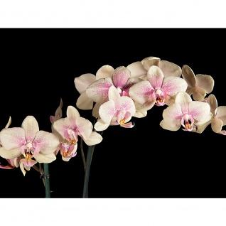 Leinwandbild Creamy Orchid Orchidee Blumen Blumenranke Rosa Pink Natur Pflanzen   no. 104 - Vorschau 3