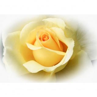 Fototapete Blumen Tapete Blüten Rose Liebe gelb | no. 2253