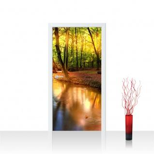 Türtapete - Wald Bäume Natur Sonne Wasser | no. 252