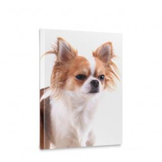 Leinwandbild Chiwawa Hund Haustiere Tiere   no. 5463