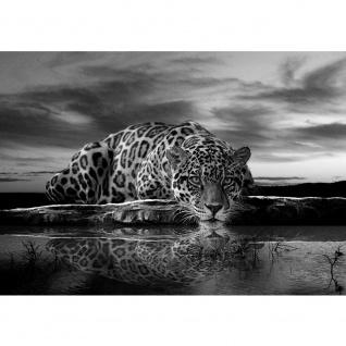 Fototapete Tiere Tapete Leopard, Wasser, Himmel schwarz - weiß | no. 3560