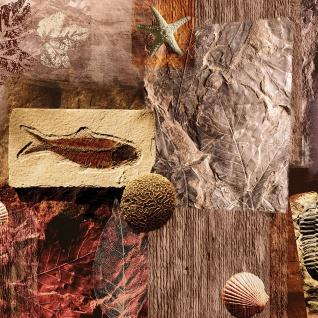 Leinwandbild Muscheln Abstrakt Kunst Eingebungen Braun Meerestiere Blätter | no. 282 - Vorschau 3