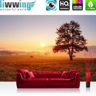 liwwing Vlies Fototapete 400x280 cm PREMIUM PLUS Wand Foto Tapete Wand Bild Vliestapete - Sonnenaufgang Baum Natur - no. 238