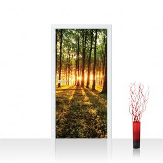 Türtapete - Sonnenuntergang Wald Bäume Wiese   no. 639