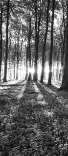 642 Fototapete Sonnenuntergang Wald Bäume Wiese liwwing no