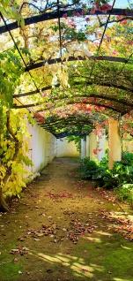 Türtapete - Way in my Garden Garten Terrasse Blumenranken Blume 3D Perspektive | no. 47 - Vorschau 5