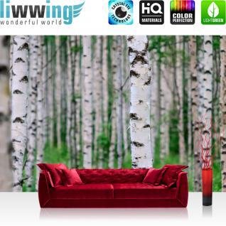 liwwing Vlies Fototapete 300x210 cm PREMIUM PLUS Wand Foto Tapete Wand Bild Vliestapete - BIRCH FOREST no.2 - Birkenwald Natur Wald Bäume Baum Forest Herbst - no. 081