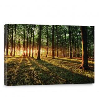 Leinwandbild Sonnenuntergang Wald Bäume Wiese   no. 639