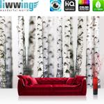liwwing Fototapete 368x254 cm PREMIUM Wand Foto Tapete Wand Bild Papiertapete - Natur Tapete Bäume Birken Wald Stamm weiß - no. 2111