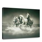 Leinwandbild Einhörner Wasser Pferd Wasser Schimmel Rennpferd | no. 1018