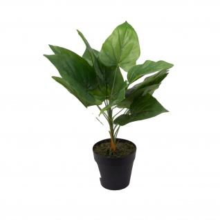 Dekopflanze Anthurium 30cm