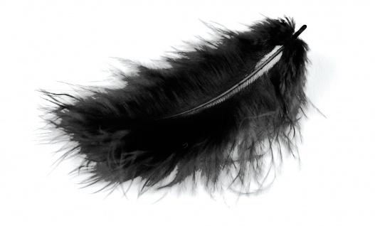 Marabufedern schwarz 10/12 cm