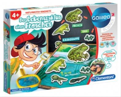 Galileo Der Lebenszyklus eines Frosches
