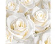 Duni Dunilin Servietten White Dreams / Weiße Rosen (50 Stück)