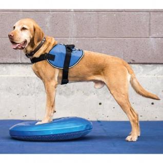 FitPAWS Balance-Scheibe für Haustiere 36 cm Blau