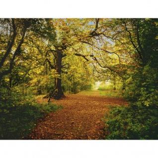 Komar Fototapete Autumn Forrest 388×270 cm 8-068
