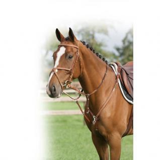 QHP Vorderzeug mit Luxus-Nähten abnehmbares Martingal schwarz + braun Pony + WB - Vorschau