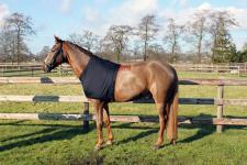 QHP Brustschutz Lycra Schulterschutz unter Decken schwarz diverse Größen