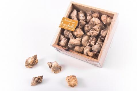 Muscheln in Holzbox