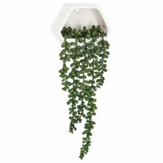 Wand-Pflanze für Wand, zeitgenössisch