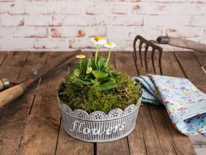 Pflanzschale MARLIES 19 cm Metall grau Vintage Pflanztopf Blumentopf Pflanzentop