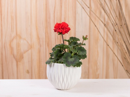 Vase FRIEDA weiß Keramik 13 cm Blumenvase Blumentopf Übertopf Deko Pflanztopf