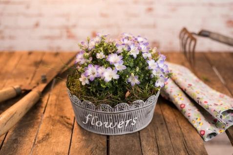 Pflanzschale MARLIES 23 cm Metall grau Vintage Pflanztopf Blumentopf Pflanzentop
