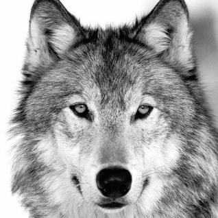 Ambiente Servietten WOLF Grau weiß 20 Stk Papierservietten Tiere 3-lagig 33x33