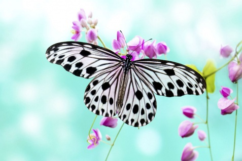 Schmetterling Butterfly Natur Poster P0075