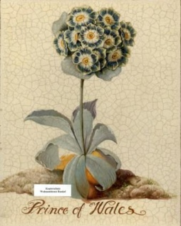 WOHNAMBIENTE Oleographie Art.-Nr.: 2694 Maße: 25, 5 x 20, 5 cm (BxH).