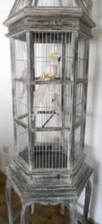 WOHNAMBIENTE Vogelhaus Art.-Nr.: P 334 Maße ca.: Umfang 61 x 61 cm, Gesamthöhe 202 cm. Einzelstück - Vorschau 2