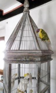 WOHNAMBIENTE Vogelhaus Art.-Nr.: P 334 Maße ca.: Umfang 61 x 61 cm, Gesamthöhe 202 cm. Einzelstück - Vorschau 3