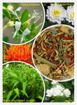 3 Blumen Function Tee (s)