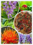 Immunpower Function Tee (Tienchi-Danshen Tee)