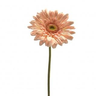Kunstblume künstliche Gerbera orange H 60cm mit fülliger Blüte GASPER