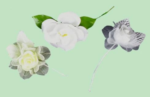23604 Offene weiße Rose mit zwei Blättern...