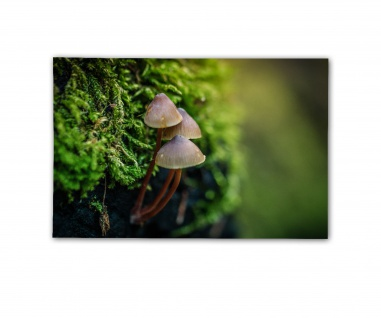Poster Pilz im Wald Naturfotografie Kunstfotografie Landschaft ab30x20cm#30943