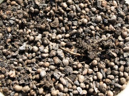 Ekto-Mykorrhiza - die natürliche Düngung für viele Bäume (1 Liter Substrat) - Vorschau 3