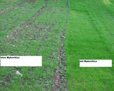 Endo-Mykorrhiza - natürliche Nährstoffversorgung für die meisten Pflanzen (1 Liter VA-Mykorrhiza) incl. Transportkosten - Vorschau 3