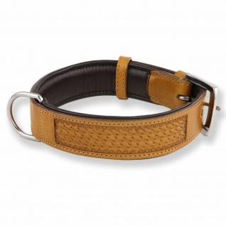Hundehalsband aus Leder mit Flechtpr?gung