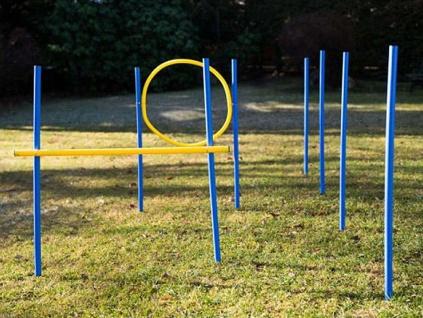 Dog Agility Trainings-Set 1 für Einsteiger