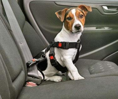 Karlie Auto-Sicherheitsgurt