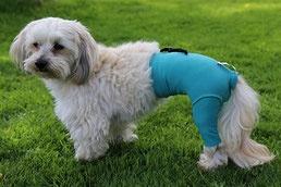 Safety Pants Body für Hunde ( Unisex )