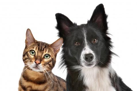 Kotuntersuchung Haustier