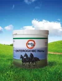Enterogenic Horse