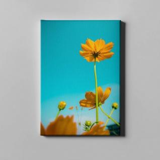 Blumen Sommer Sonnenhut Natur Leinwand L0361